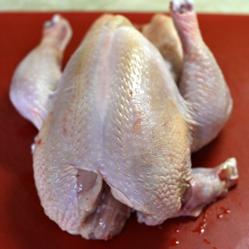 Kuře.