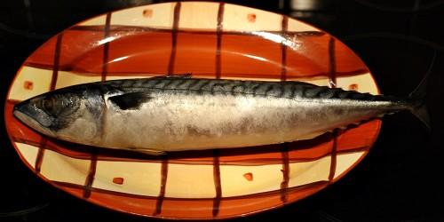Mražená makrela
